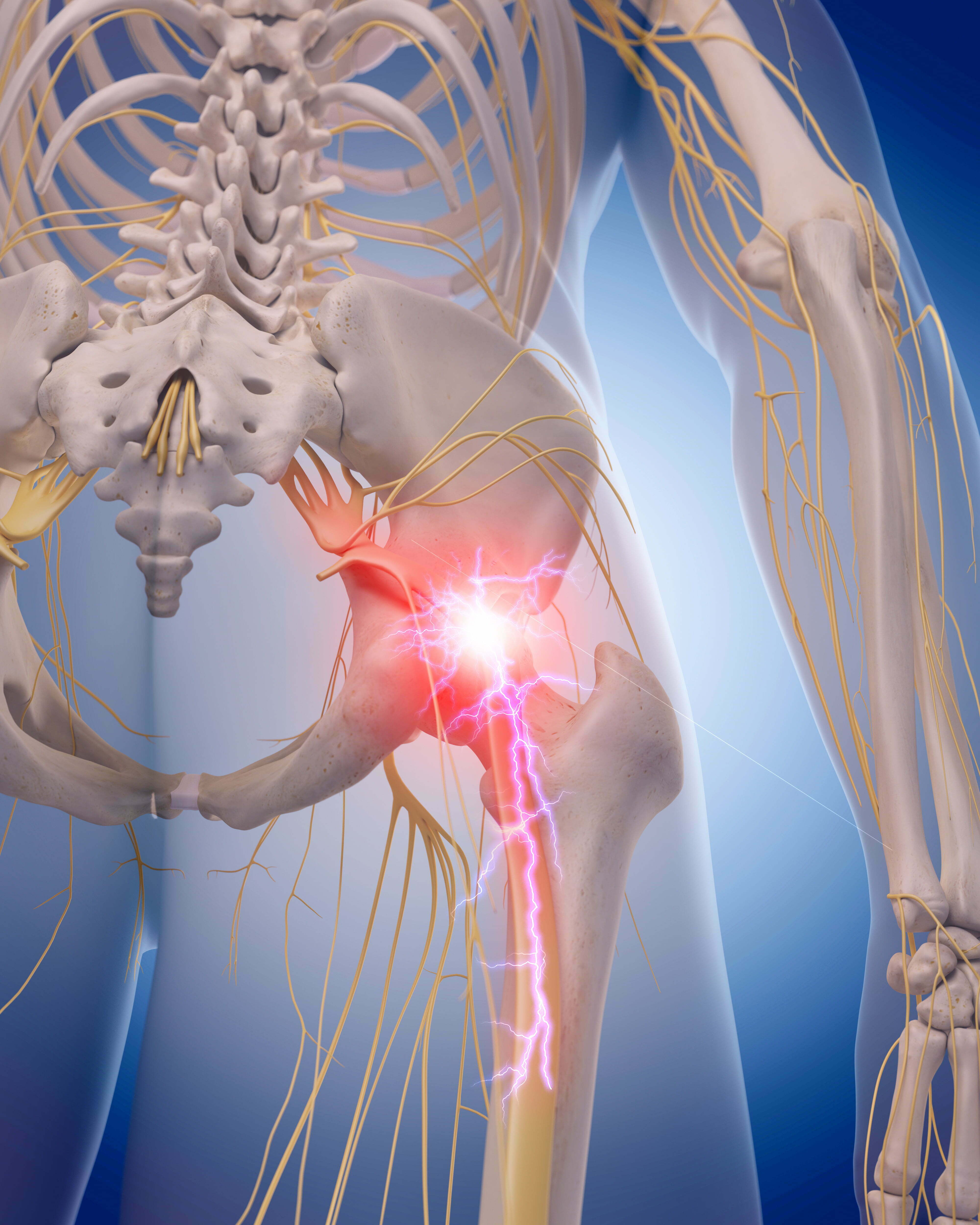 bigstock medically accurate illustratio 100377239
